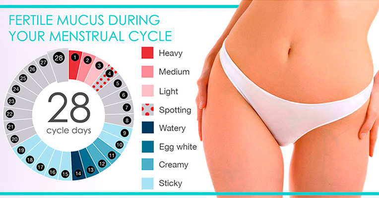 Fertile Mucus During Menstrual Cycle