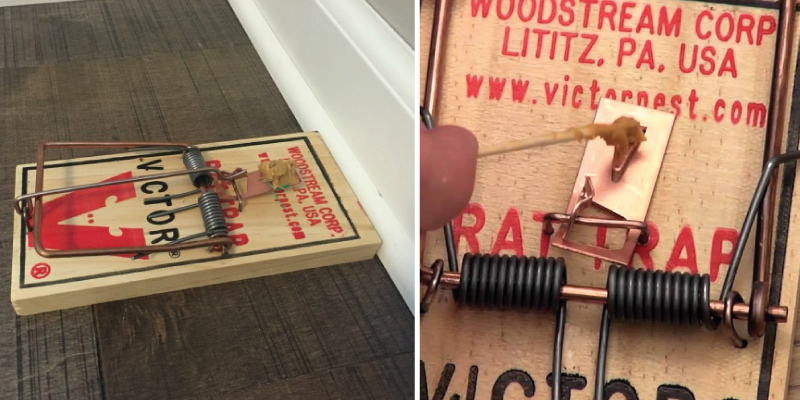 Review of Victor Metal Pedal Rat Trap
