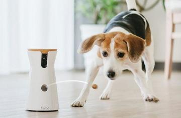 Best Dog Cameras for Your Furry Friend