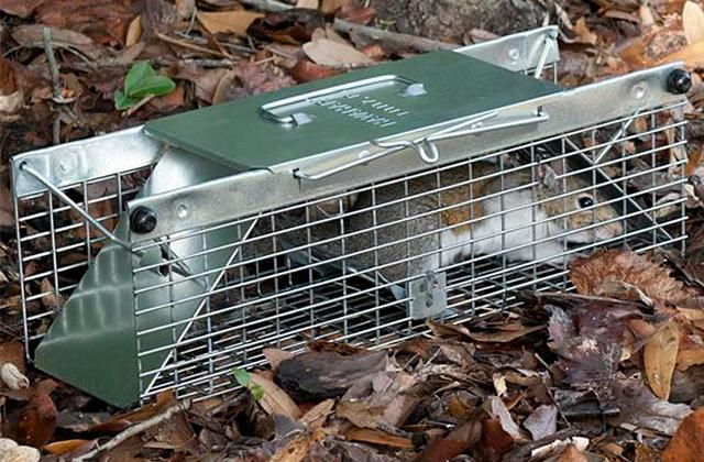 Best  Rodent Traps