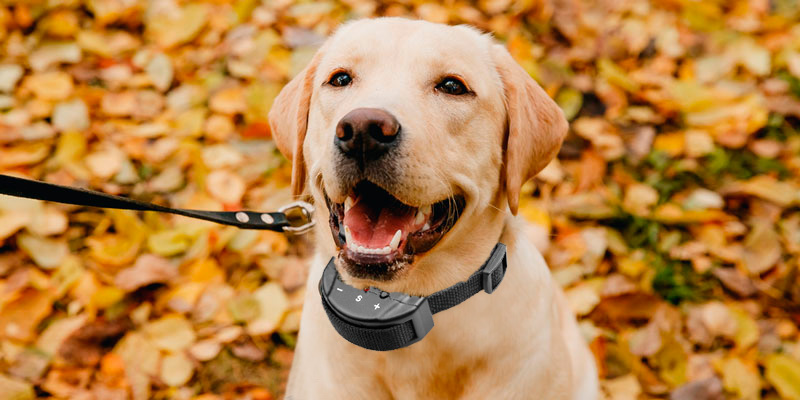 Review of Petiner Dog Bark Control Collar