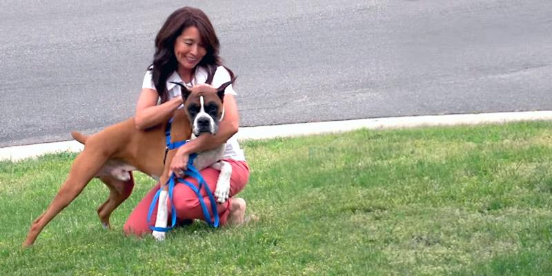 Review of PetSafe Reflective Easy Walk Dog Harness