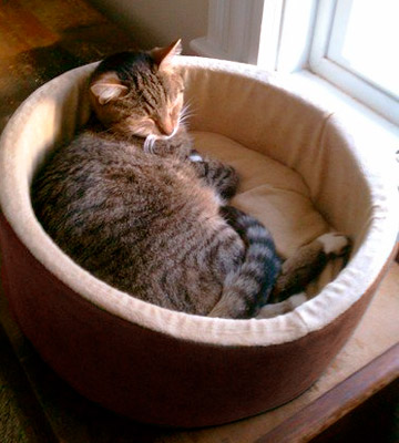 Review of K&H Pet Products Thermo-Kitty Cat Bed