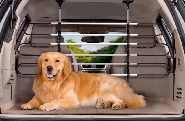 Best Pet Car Protectors and Barriers