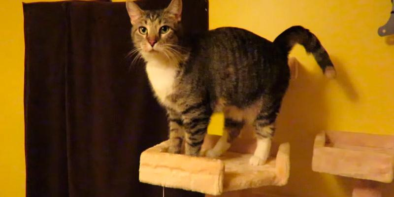 Go Pet Club Cat Tree Furniture in the use