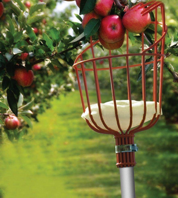Review of Ohuhu 4801391 Fruit Picker with Light-weight Aluminum Telescoping Pole