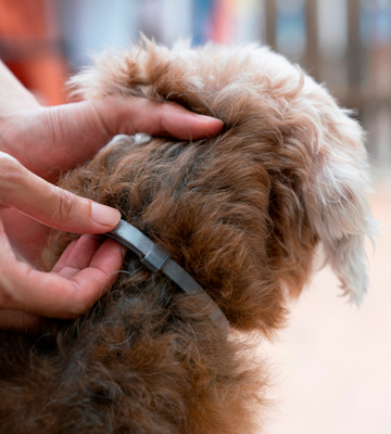 Review of LOVATIC One Size Flea Tick Prevention for Dogs