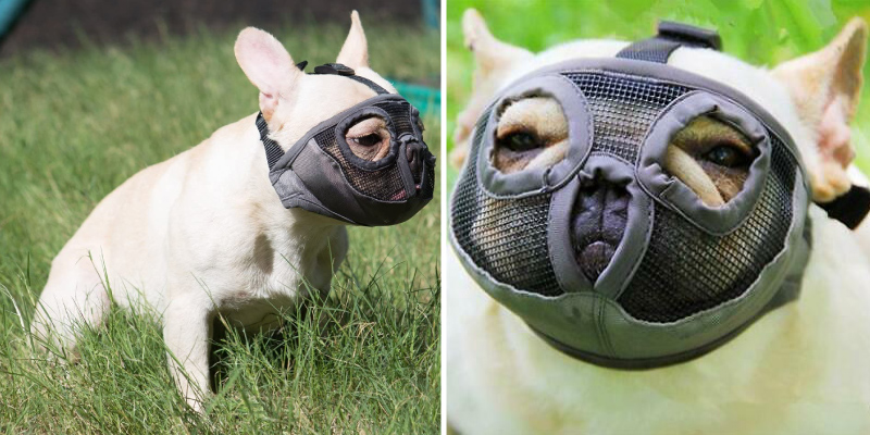 Review of JYHY Breathable Short Snout Dog Muzzles for Biting Chewing Barking