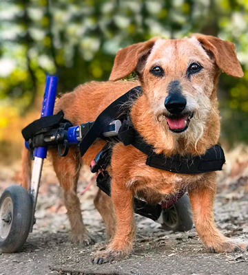 Review of Walkin' Wheels Veterinarian Approved Dog Wheelchair