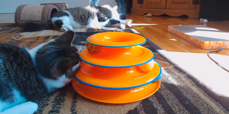 Review of Petstages 3X THE FUN Tower of Tracks Cat Toy