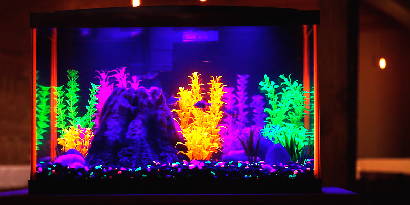Review of Aqueon NeoGlow (100530343) 10 Gallon Aquarium Starter Kits