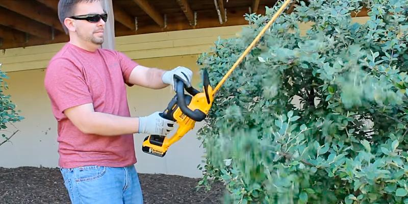 DEWALT DCHT820P1 with 5AH Pack 20 V Hedge Trimmer in the use