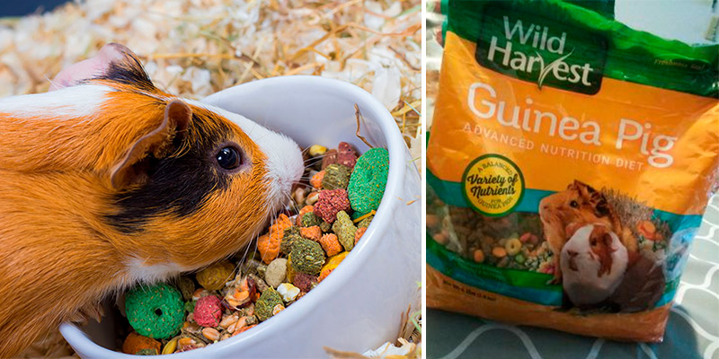 Review of Wild Harvest Advanced Nutrition Diet for Guinea Pigs