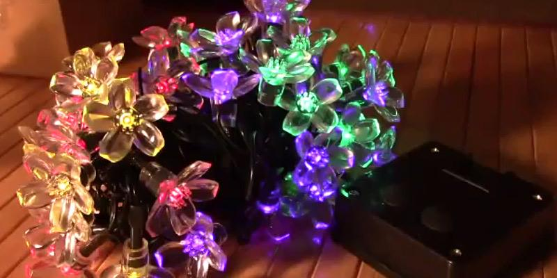 Review of Qedertek Solar Flower Garden Lights for Outdoor