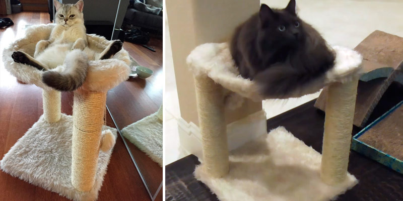 Detailed review of TRIXIE Pet Products Baza Cat Tree