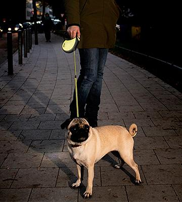 Review Of Flexi Neon Retractable Dog Leash