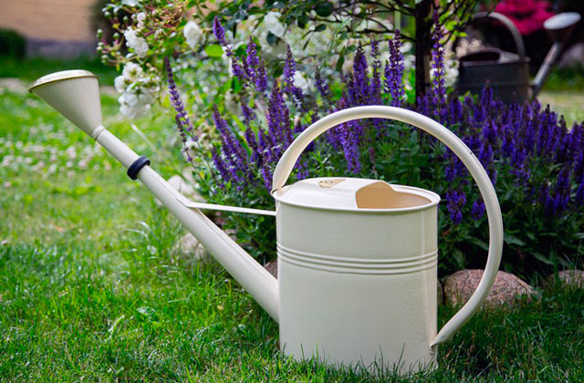 Best Watering Cans for Your Beautiful Garden