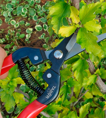Review of Tabor Tools K-7 Straight Blade Pruning Shears