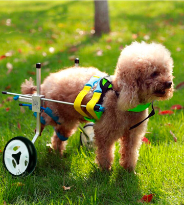 Review of Homend Adjustable Dog Wheelchair