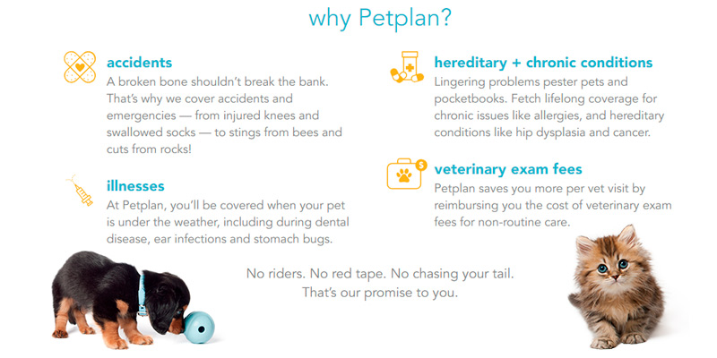 Petplan Pet Insurance in the use