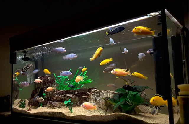 Best Aquarium Lights