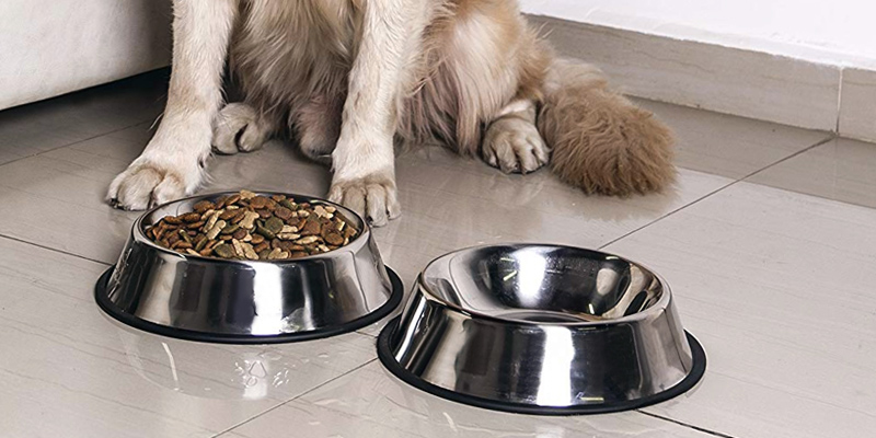 Review of 4LoveDogs Stainless Steel Holds up to 32-ounce