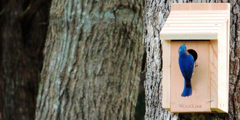 Review of Woodlink BB1 Wooden Bluebird House