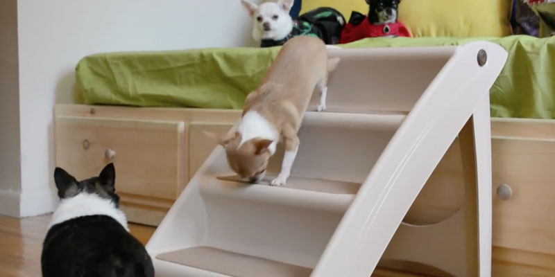 Detailed review of Solvit Pup Step Plus Pet Stairs