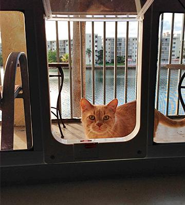 Review of Ideal Pet Products Sash Window Adjustable Width