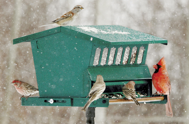 Best Bird Feeders to Attract Wild Birds to Your Backyard