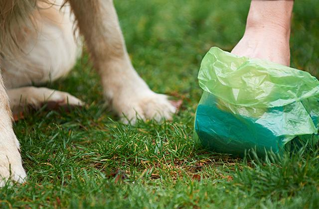 Best Dog Waste Bags