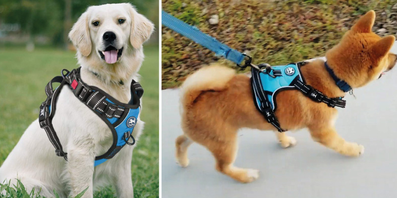 Review of PoyPet Reflective Adjustable Soft Padded Dog Harness