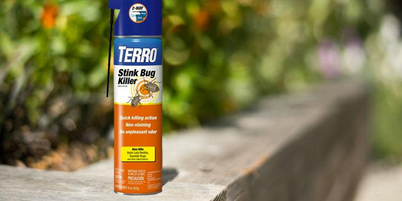 Detailed review of Terro Stink Bug Killer
