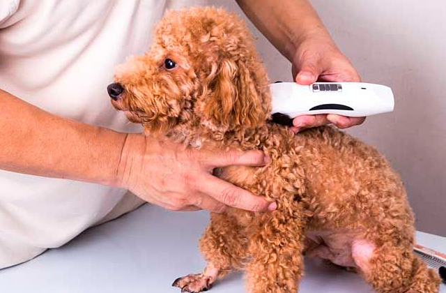 Best Dog Hair Trimmers