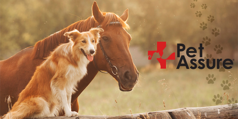 Detailed review of Pet Assure America's Veterinary Discount Plan