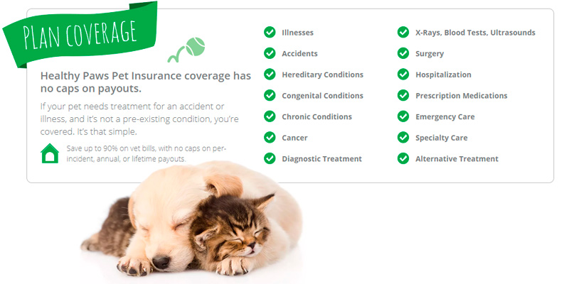 Healthy Paws Pet Insurance in the use