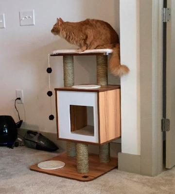 Review of Vesper Cat Tree Furniture