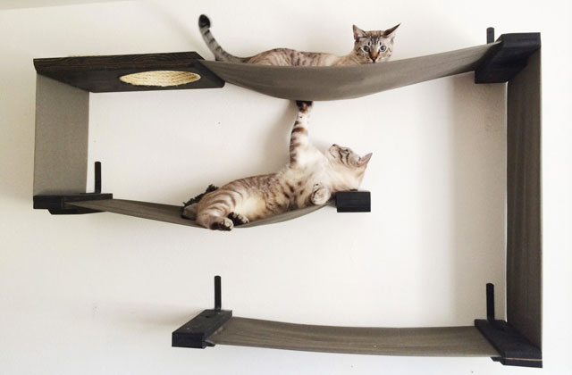 Best Cat Perches to Keep Your Feline Happy and Entertained