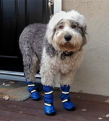 Review of HiPaw Winter Water Resistan Dog Boots