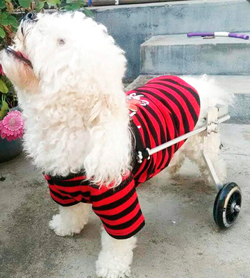 Review of Anmas Sport Adjustable Pet Wheelchair