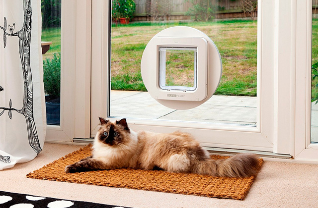 Best Cat Doors