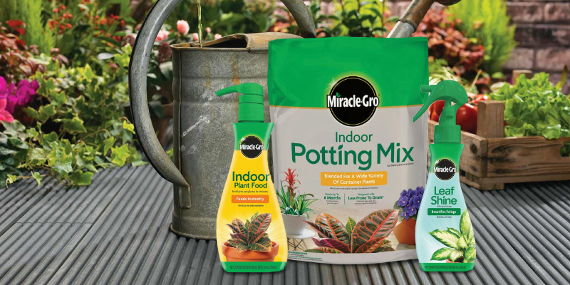 Review of Miracle-Gro Indoor Potting Mix Indoor Plant Food & Leaf Shine