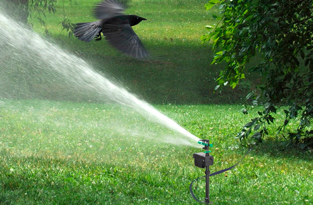 Best Motion Activated Sprinklers