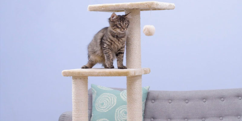 Detailed review of Go Pet Club Cat Tree Beige Color