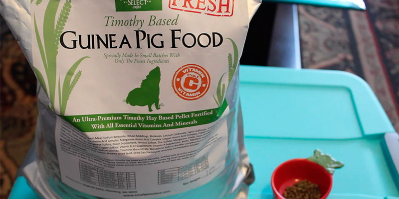 Review of Small Pet Select Pellets Guinea Pig Food