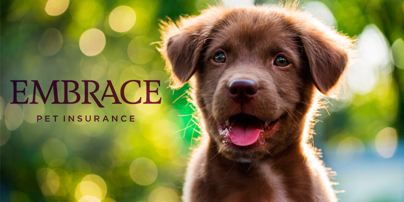 Detailed review of Embrace Pet Insurance