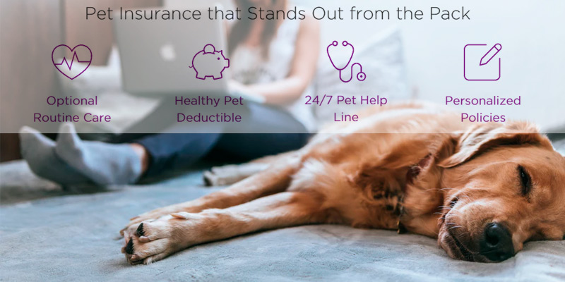 Embrace Pet Insurance in the use
