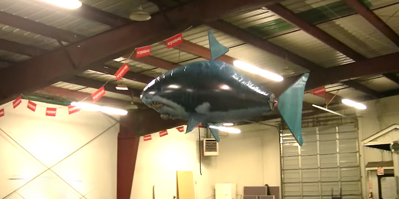 William Mark Air Swimmers RC Flying Shark in the use