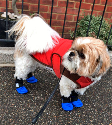 Review of LONSUNEER Paw Protector Dog Boots