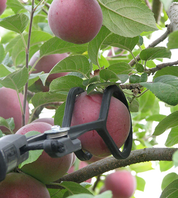 Review of The Twister Fruit Picker Tool with Extension Pole
